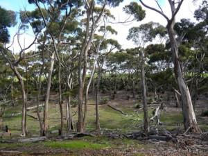 Snellings bushland